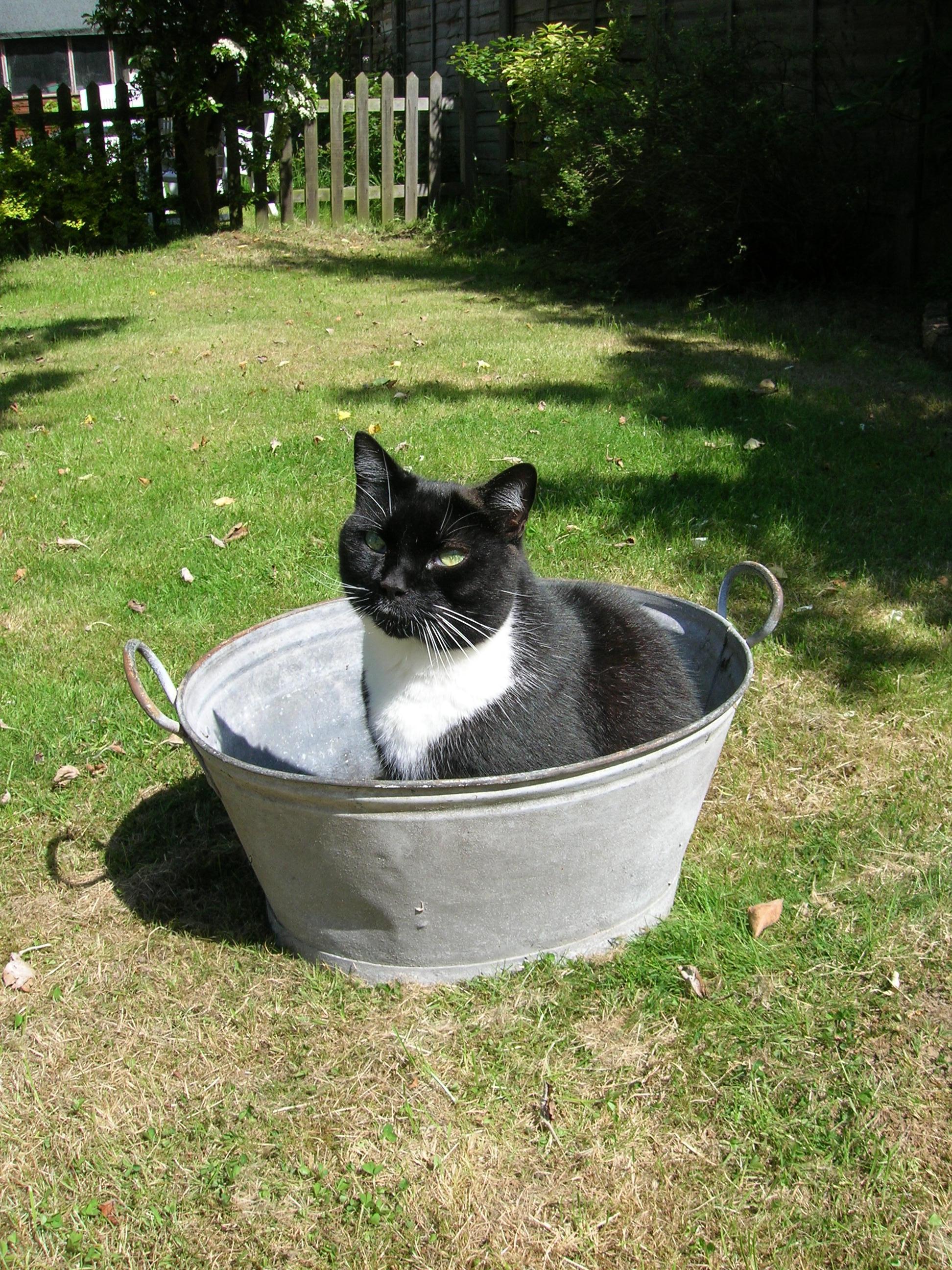 Cat in a bath by Juliamaud