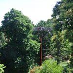 Treetop walk - photo by Juliamaud