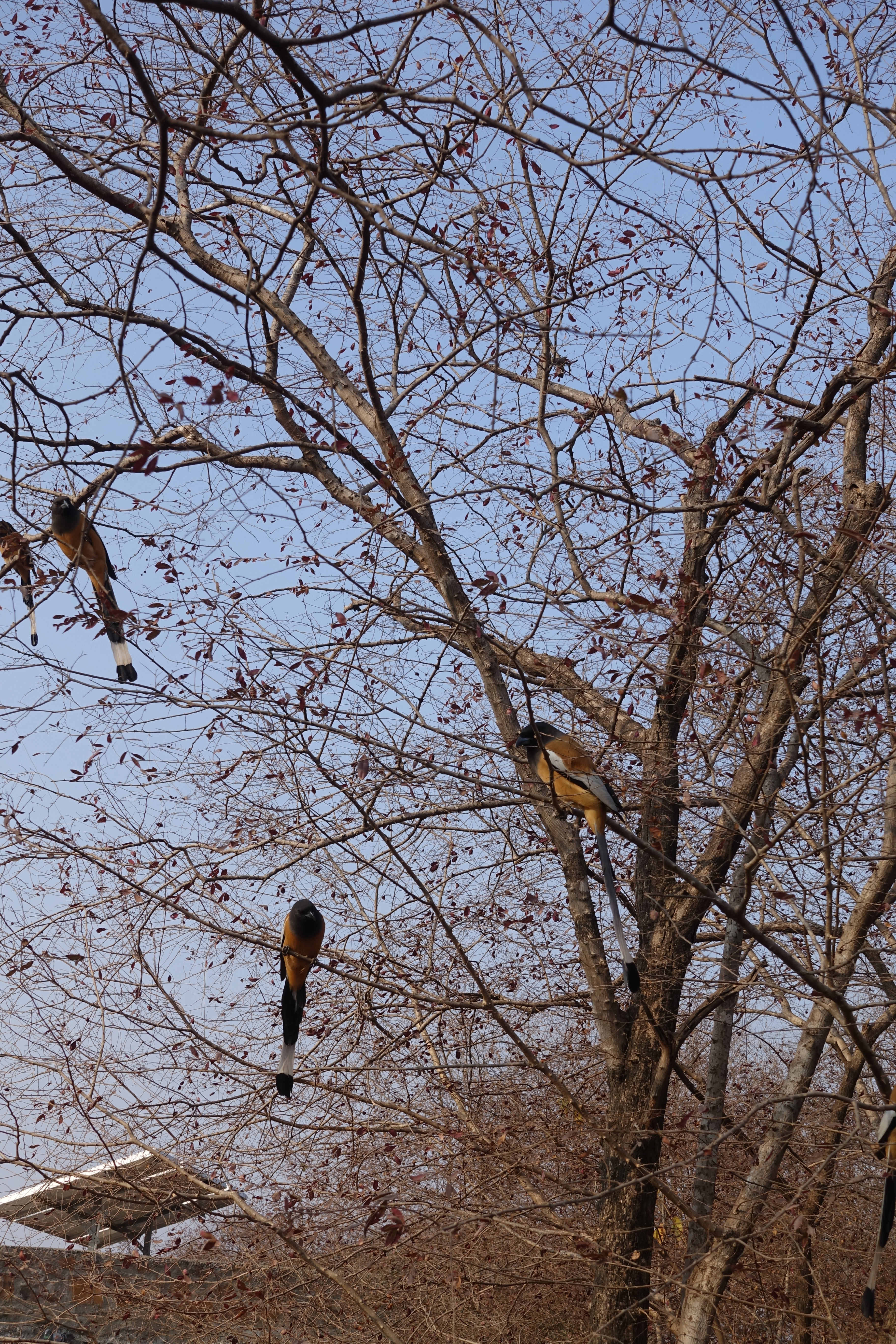 Birds in the Trees in Ranthambhore National Park - photo by Juliamaud