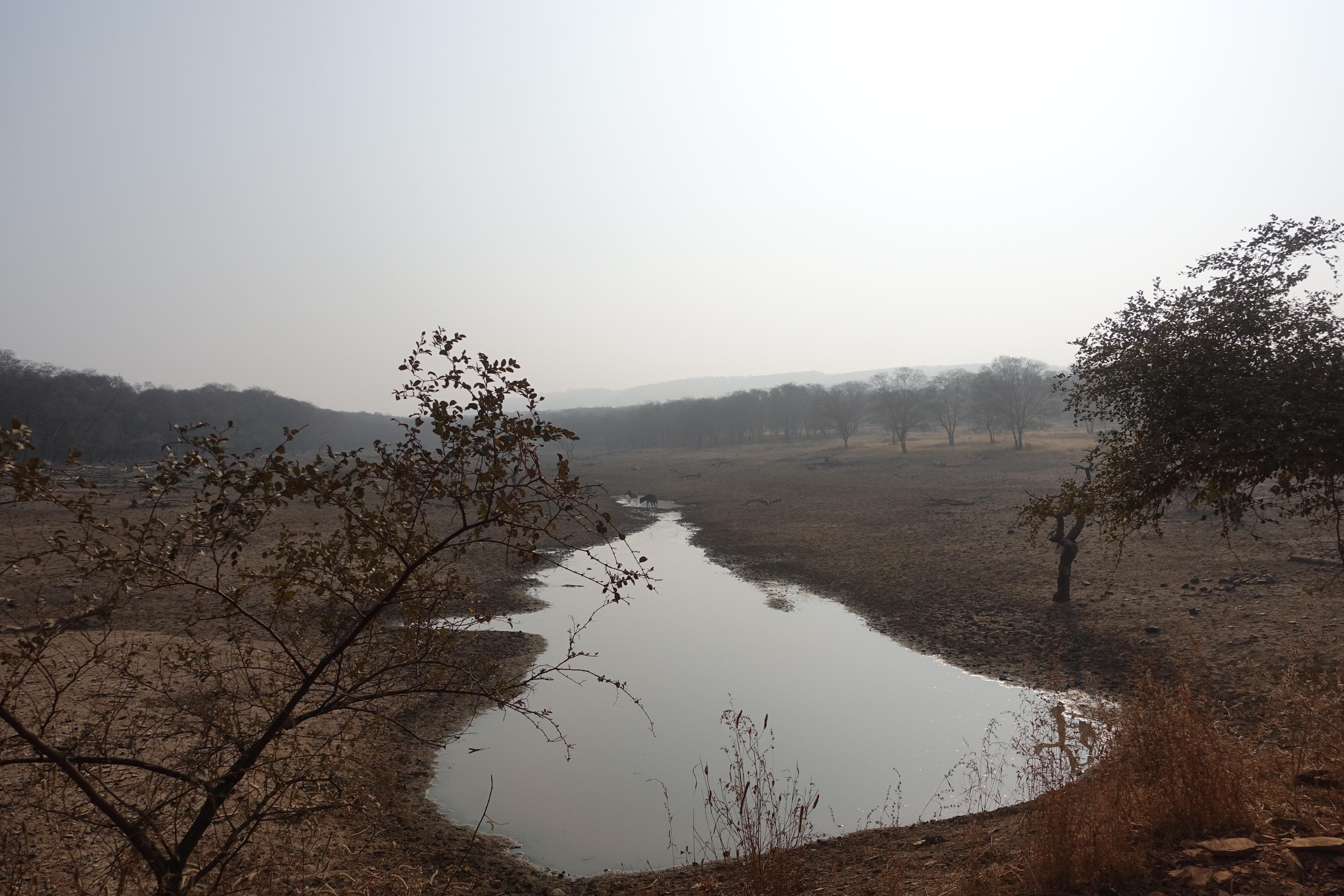 Ranthambhore National Park - photo by Juliamaud