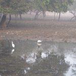 Birds in Ranthambhore National Park - photo by Juliamaud