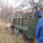 Assessing the damage to the canter in Ranthambore National Park -photo by Juliamaud